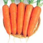 Морковь от рака