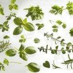 Время сбора лекарственных трав