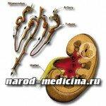 Гломерулонефрит лечение и симптомы