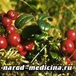 Лечение обструктивного бронхита народными средствами
